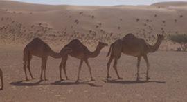 Viajes Al Desierto De Oman