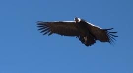 Ruta De Perú - Condor
