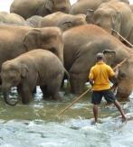 Sri Lanka, elefantes y ballenas