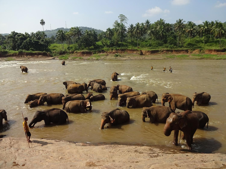 visitar SriLanka