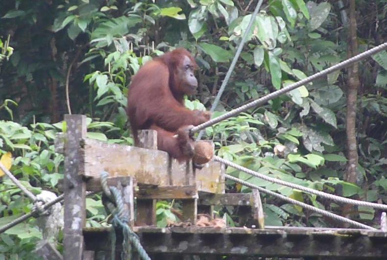 Centro De Recuperacion De Orangutanes