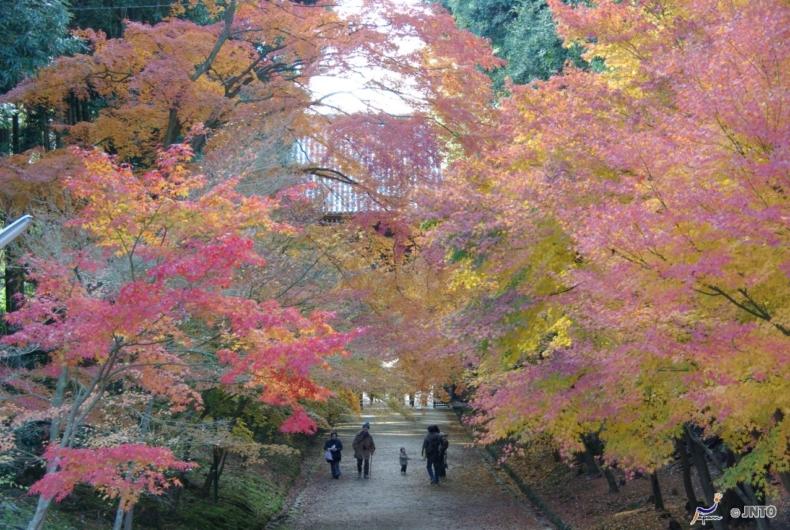 Visitas en japon