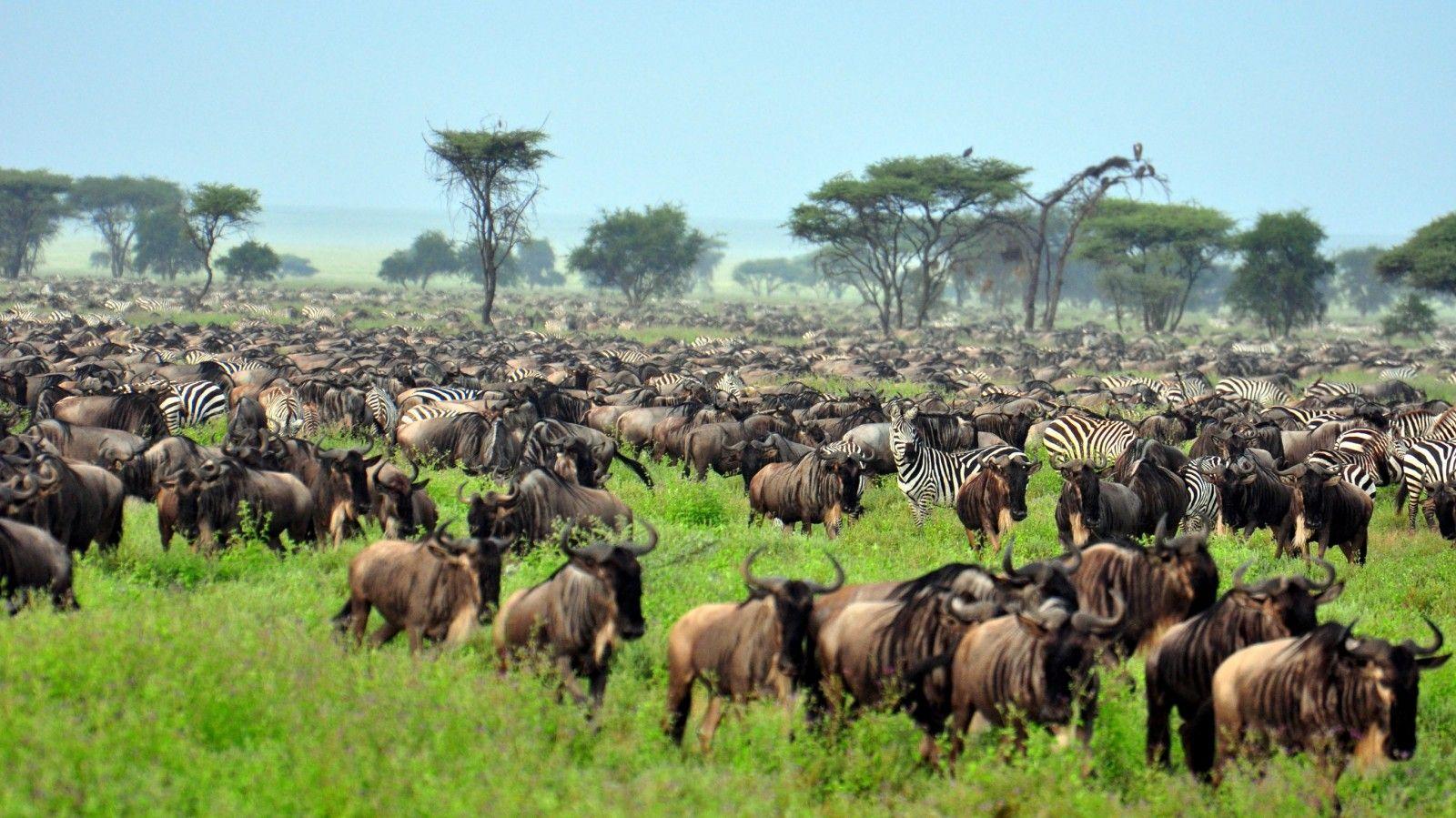 Que ver en Serengeti