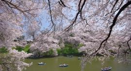 Japón, a tu aire