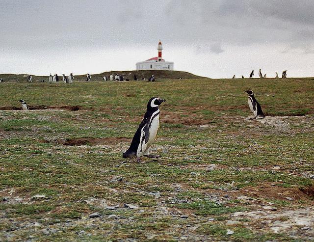 Escapada a Chile - visita a la isla de la magdalena