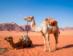 Desierto Del Wadi Rum - Viaje A Jordania