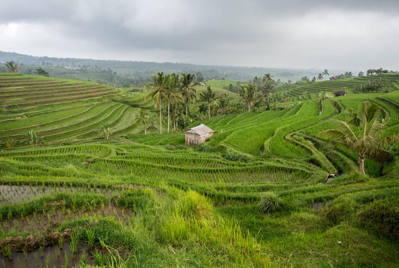 Campos De Arroz En Bali - Rutas Por Indonesia