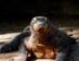 Viaje A Indonesia - Viaje A La Isla De Komodo