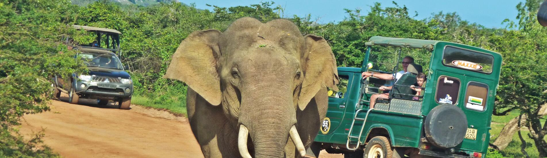 Baner-Viajes-a-Sri-Lanka-para-toda-la-familia