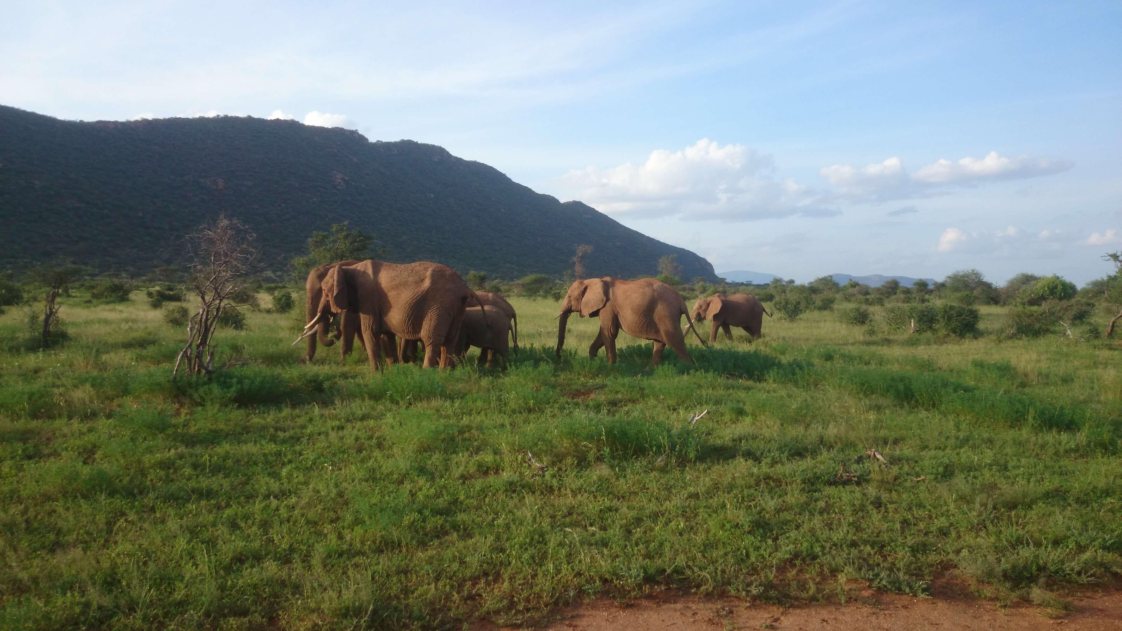 Manada-de-elefantes-Tours-por-Kenia