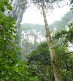 MALASIA Y BORNEO, CON CARLOS MONFORTE