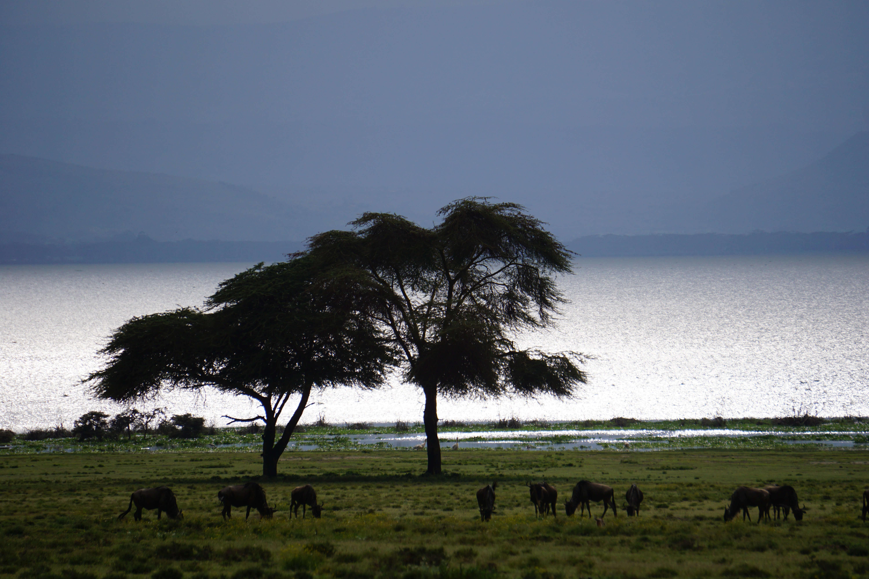 Sabana-de-Kenia-Viajes-por-Kenia-y-Tanzania