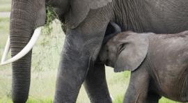 Tanzania, vida salvaje