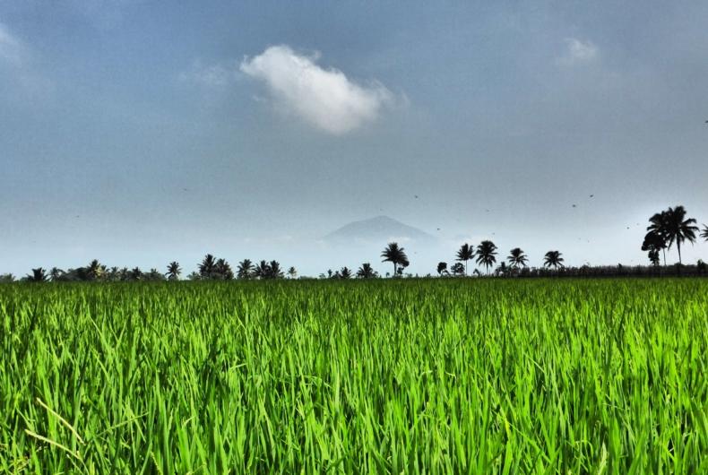 Paisajes De Campos En Indonesia