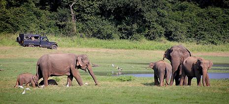 AspasiaTravel-SriLanka