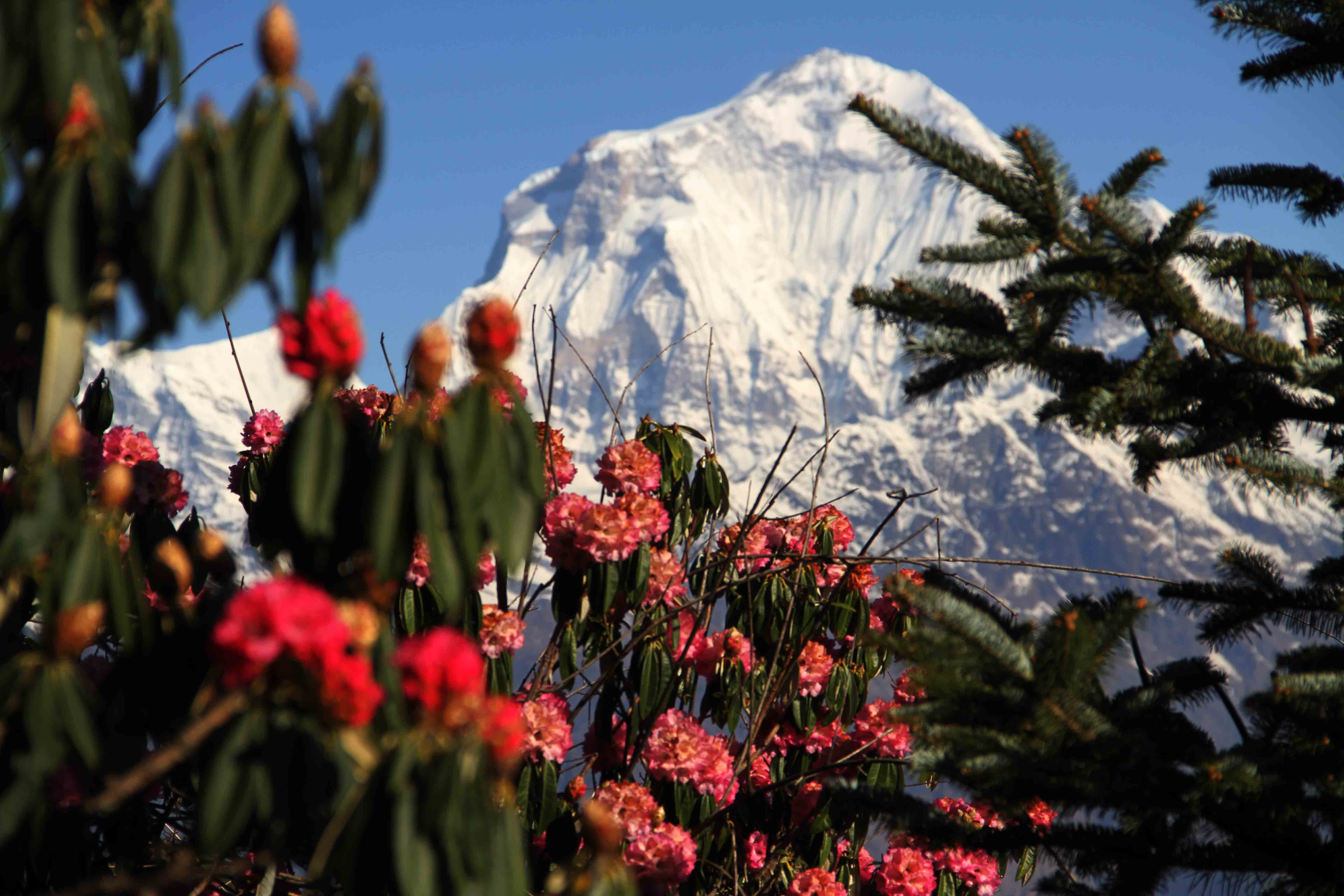 Trekking por el Anapurna
