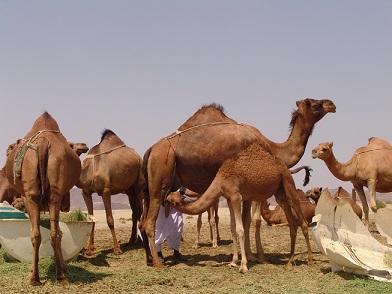 Arabia con profesor